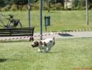DOG_RUNNING_005