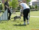 DOG_RUNNING_025