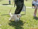 DOG_RUNNING_029
