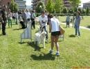 DOG_RUNNING_031